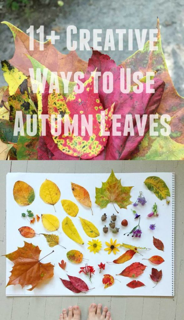 What to do with Autumn Leaves - More Than 11 Creative Ideas