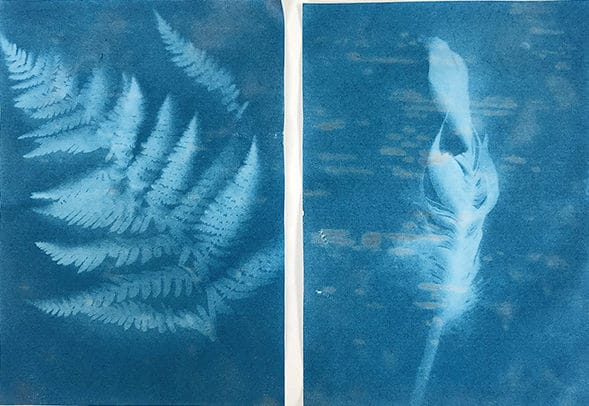 Sunprints-of-a-fern-and-feather